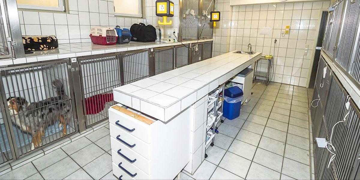 Auf Station der Kleintierpraxis Graf, Köln-Porz